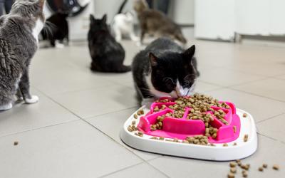 Comment acheter des aliments en ligne pour vos animaux de compagnie ?
